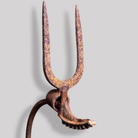 Gazelle-tête
